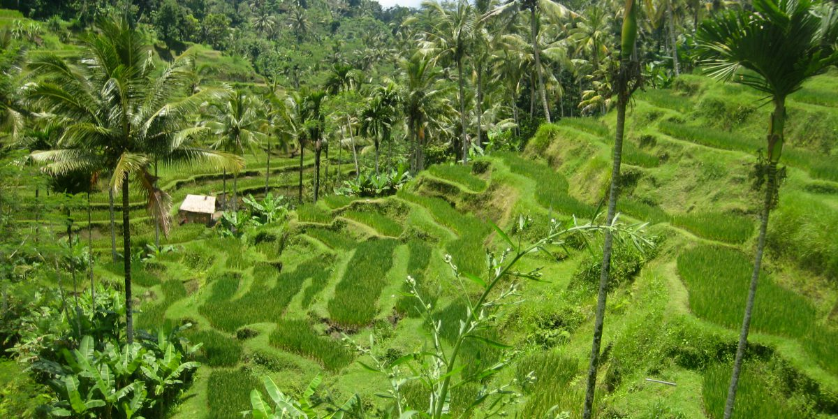 Yoga Retreat Ubud Bali with Anna Smallwood and Caitlin Rose Kenney